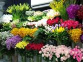 shop hoa tuoi thanh pho thanh hoa shophoatuoibi com